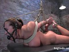 Hogtied Trina Michaels anal hooked and vibrated